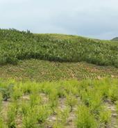 种植基地实拍图2
